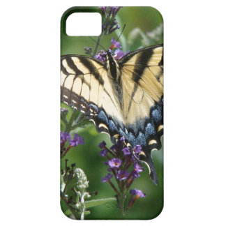 Swallowtail Butterfly Flower Floral Wildlife iPhone 5 Covers