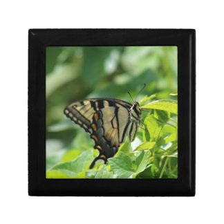 Swallowtail Butterfly Gift Boxes