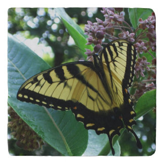 Swallowtail Butterfly I on Milkweed at Shenandoah Trivet