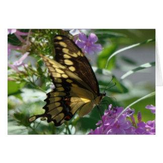Swallowtail Butterfly&Lavendar Phlox Card