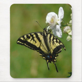 SwallowTail Butterfly on a Blackberry Blossom Mouse Pad