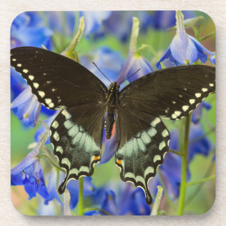 Swallowtail Butterfly on blue Coaster