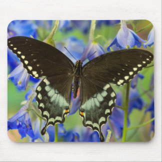 Swallowtail Butterfly on blue Mouse Pad