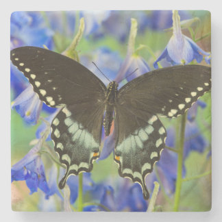 Swallowtail Butterfly on blue Stone Beverage Coaster