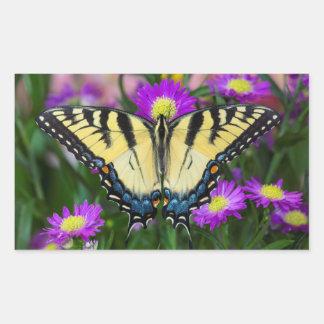 Swallowtail Butterfly on daisy
