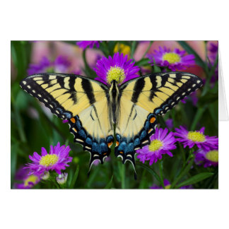Swallowtail Butterfly on daisy Card
