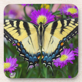 Swallowtail Butterfly on daisy Coaster