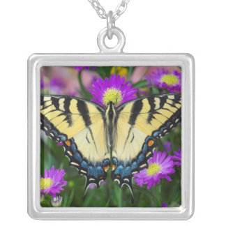 Swallowtail Butterfly on daisy Silver Plated Necklace