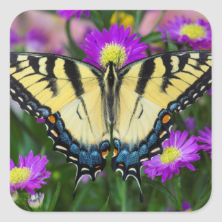Swallowtail Butterfly on daisy Square Sticker