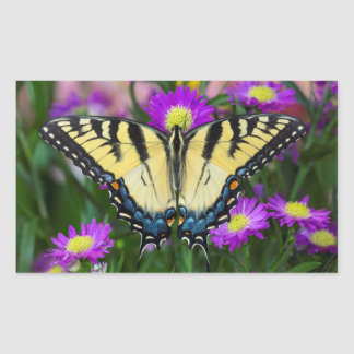 Swallowtail Butterfly on daisy Sticker