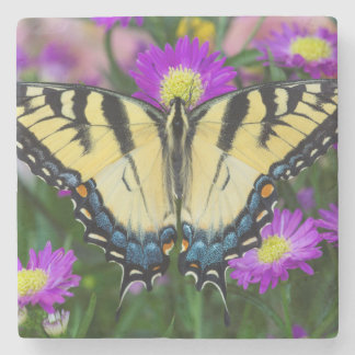 Swallowtail Butterfly on daisy Stone Beverage Coaster