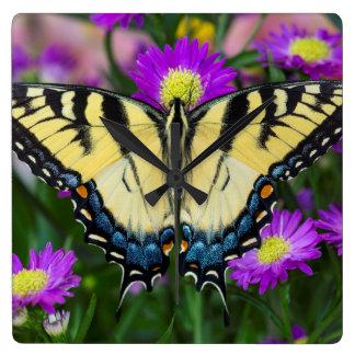 Swallowtail Butterfly on daisy Wall Clocks