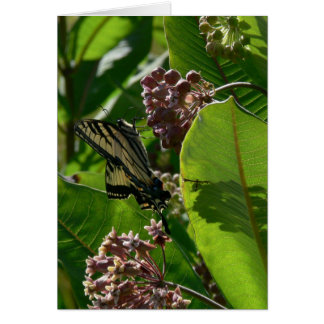 Swallowtail Butterfly on Milkweed Blossoms Card