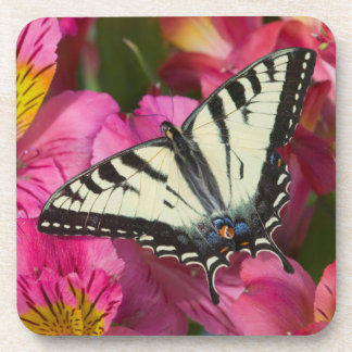 Swallowtail Butterfly on pink Coaster