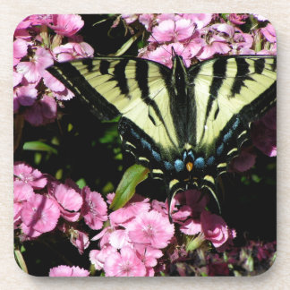 Swallowtail Butterfly on pink flowers Coaster