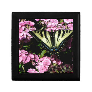 Swallowtail Butterfly on pink flowers Gift Box