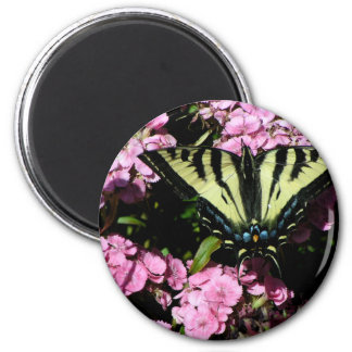 Swallowtail Butterfly on pink flowers Magnet