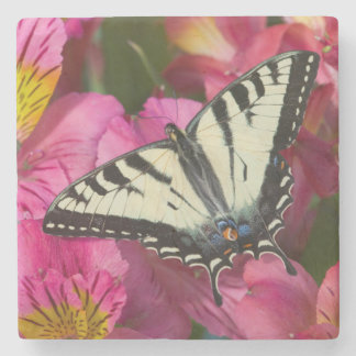 Swallowtail Butterfly on pink Stone Coaster