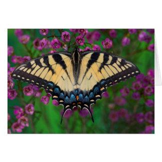 Swallowtail Butterfly on purple Card