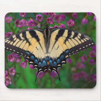 Swallowtail Butterfly on purple Mouse Pad