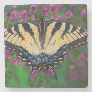 Swallowtail Butterfly on purple Stone Coaster