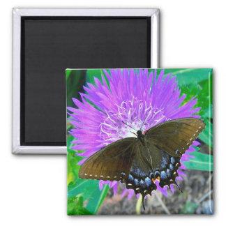 Swallowtail Butterfly, Purple Pixie Flower  Magnet