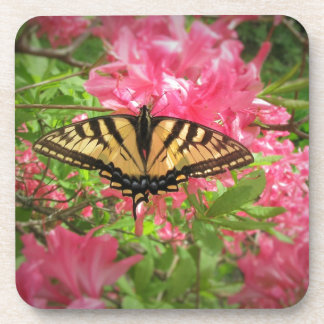 Swallowtail Butterfly Sits on Pink Azaleas Coaster