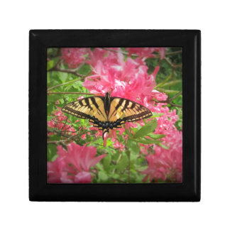 Swallowtail Butterfly Sits on Pink Azaleas Gift Box