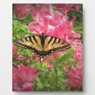 Swallowtail Butterfly Sits on Pink Azaleas Plaque