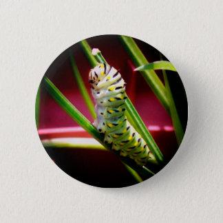 Swallowtail Caterpillar 2 Inch Round Button