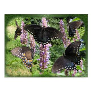 Swallowtail collage 2 ~ postcard
