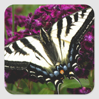 Swallowtail on the Butterfly Bush Square Sticker