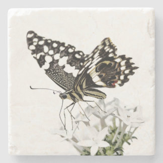 Swallowtail perched in white stone coaster