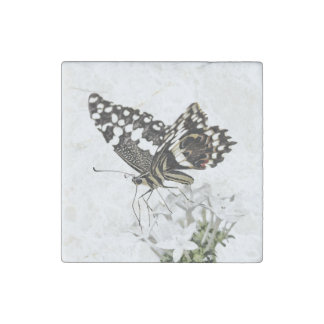 Swallowtail perched in white stone magnets
