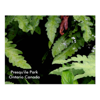 Swamp Flora, Jobes Woods Postcard