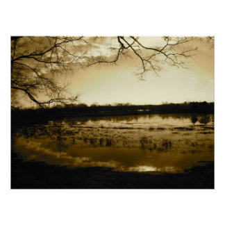 Swamp Photo Poster