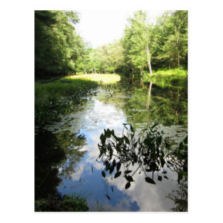 Swamp Reflections Postcard