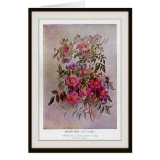 Swamp Rose Botanical Wildflower Flower Blank Card