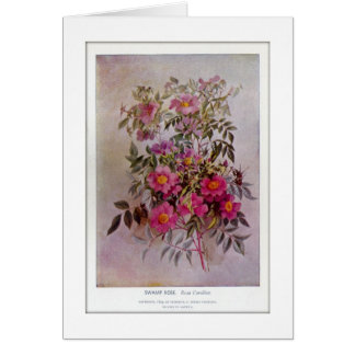 Swamp Rose Botanical Wildflower Flower Blank Card