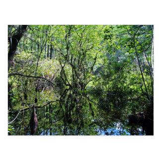 Swamp Song Postcard