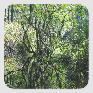 Swamp Song Square Sticker
