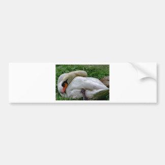 Swan 1 bumper sticker