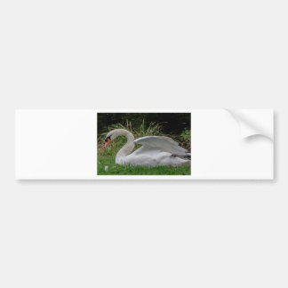 Swan 2 bumper sticker