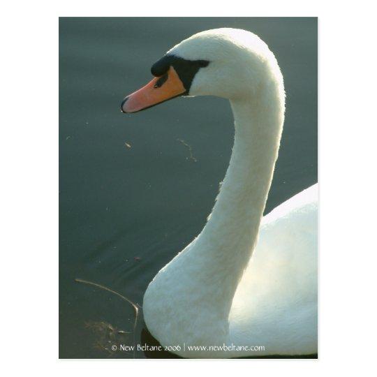 Swan [Adult] Postcard