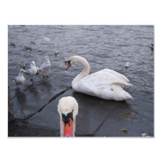 Swan and Gulls Card