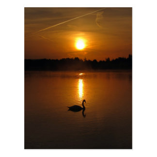 Swan and sunset postcard