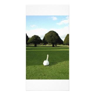 Swan at Hampton Court Palace, UK Photo Card