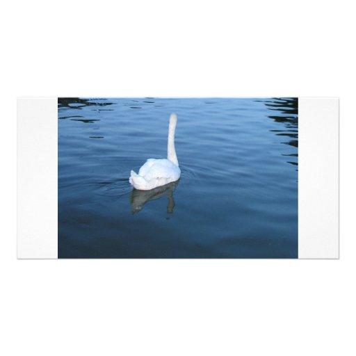 Swan at Hampton Court Palace, UK Picture Card