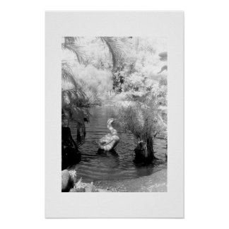 Swan at the Garden of Eden Poster