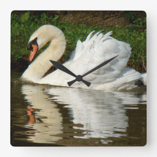 Swan Birds Wildlife Animals Clocks